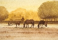Early Morning Horses